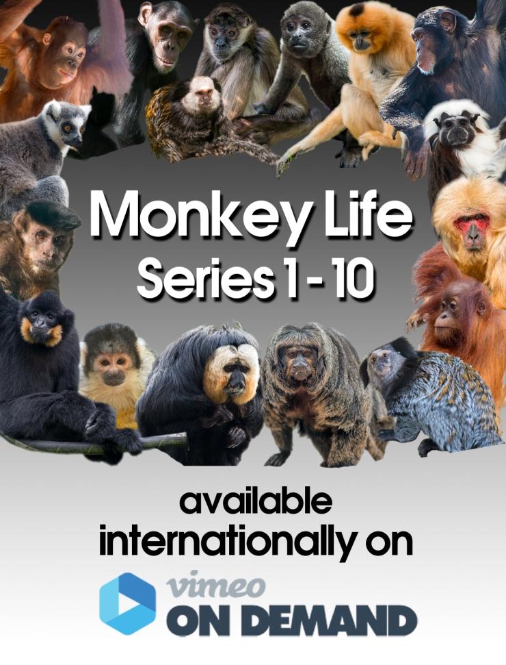 Vimeo Flyer_International